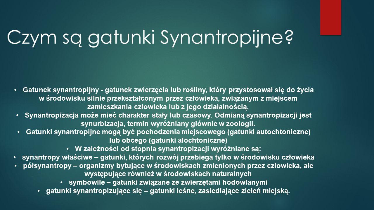 Gatunki synantropijne BOCIAN BIAŁY WRÓBEL ZWYCZAJNY GOŁĄB SKALNY KUNA DOMOWA MUCHA DOMOWA MYSZ DOMOWA SZCZUR WĘDROWNY
