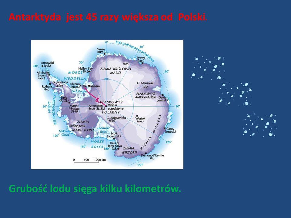 Grubość lodu sięga kilku kilometrów. Antarktyda jest 45 razy większa od Polski.