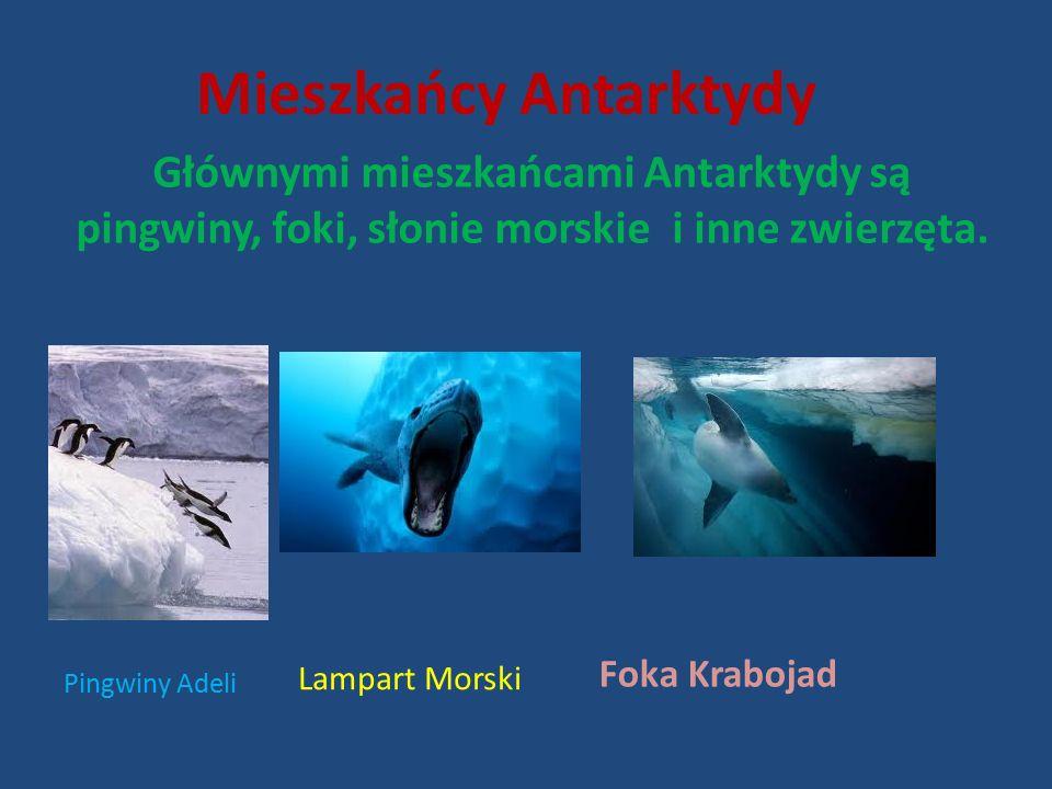Mieszkańcy Antarktydy Głównymi mieszkańcami Antarktydy są pingwiny, foki, słonie morskie i inne zwierzęta.