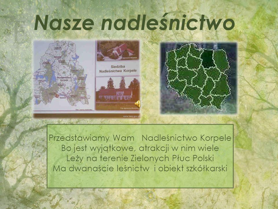 Przedstawiamy Wam Nadleśnictwo Korpele Bo jest wyjątkowe, atrakcji w nim wiele Leży na terenie Zielonych Płuc Polski Ma dwanaście leśnictw i obiekt szkółkarski Nasze nadleśnictwo