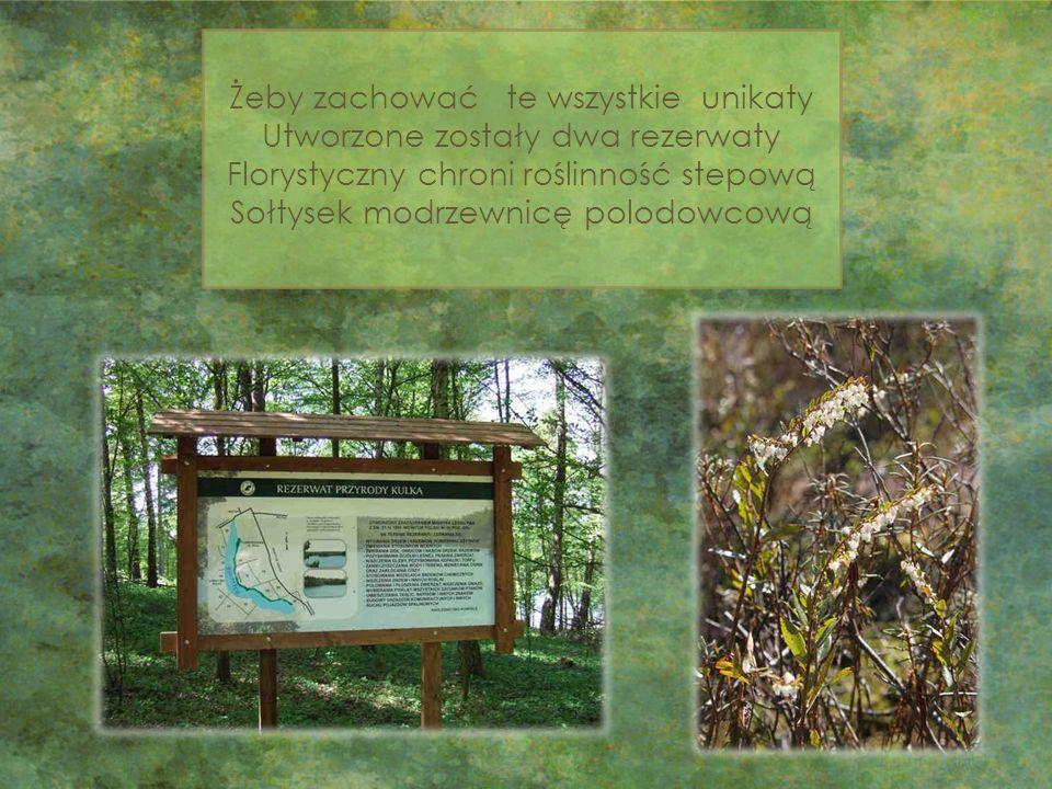 Żeby zachować te wszystkie unikaty Utworzone zostały dwa rezerwaty Florystyczny chroni roślinność stepową Sołtysek modrzewnicę polodowcową