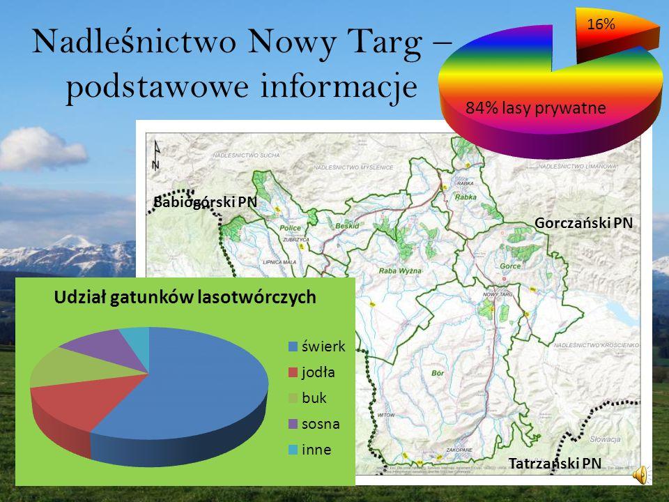 Nadle ś nictwo Nowy Targ – podstawowe informacje Babiogórski PN Gorczański PN Tatrzański PN 16%
