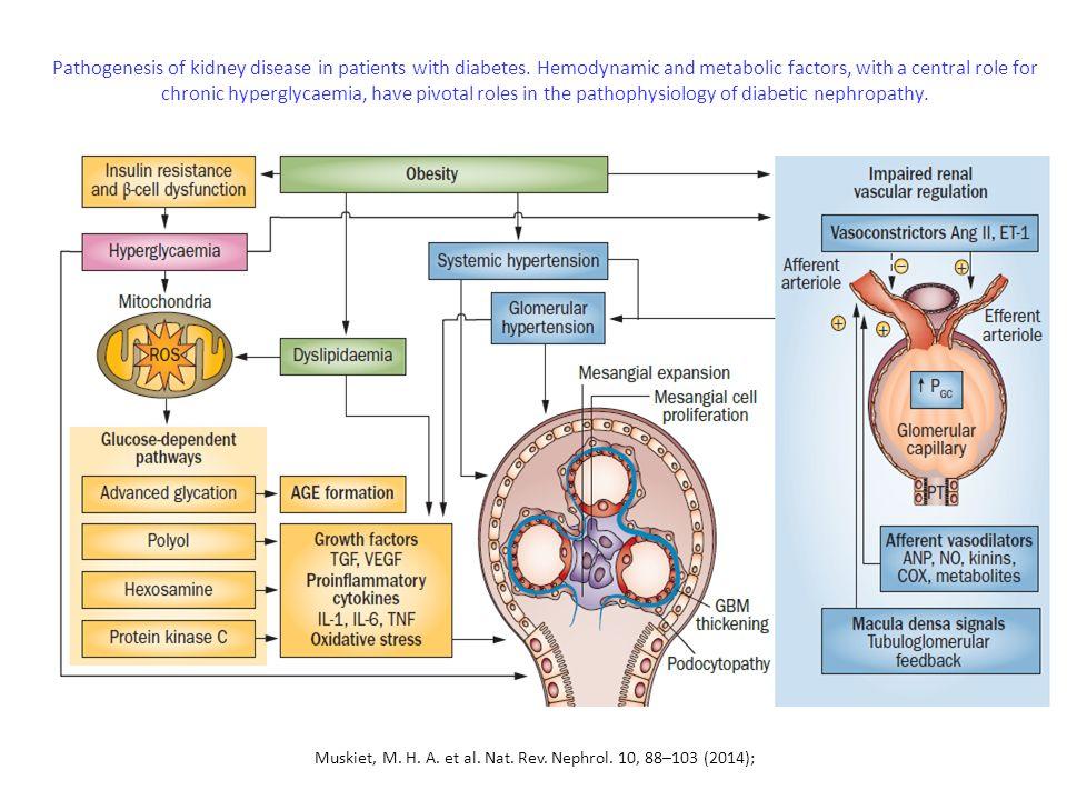 The effect of RAAS blockade on the progression of diabetic nephropathy Sara S.