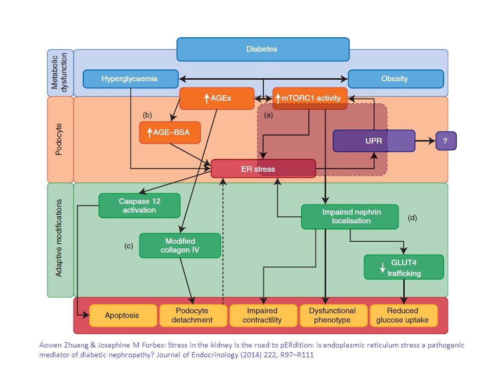 A.K. Mottl et al. / Journal of Diabetes and Its Complications 27 (2013) 123–127