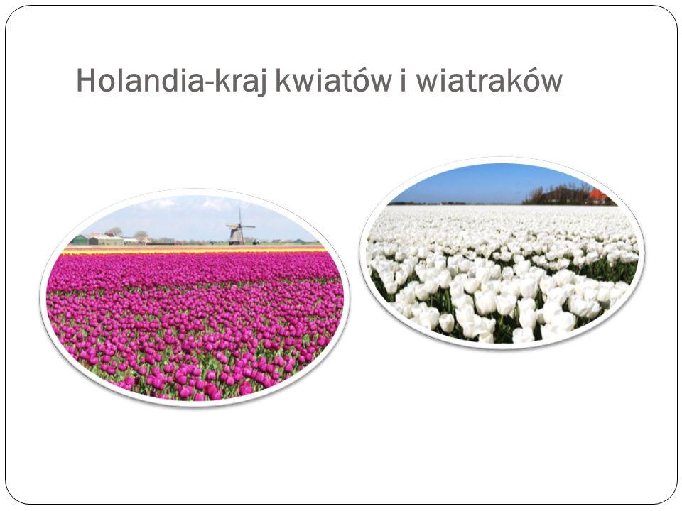 Holandia-kraj kwiatów i wiatraków