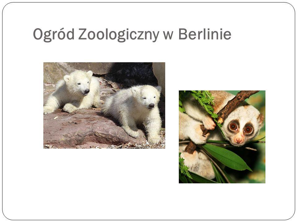 Ogród Zoologiczny w Berlinie