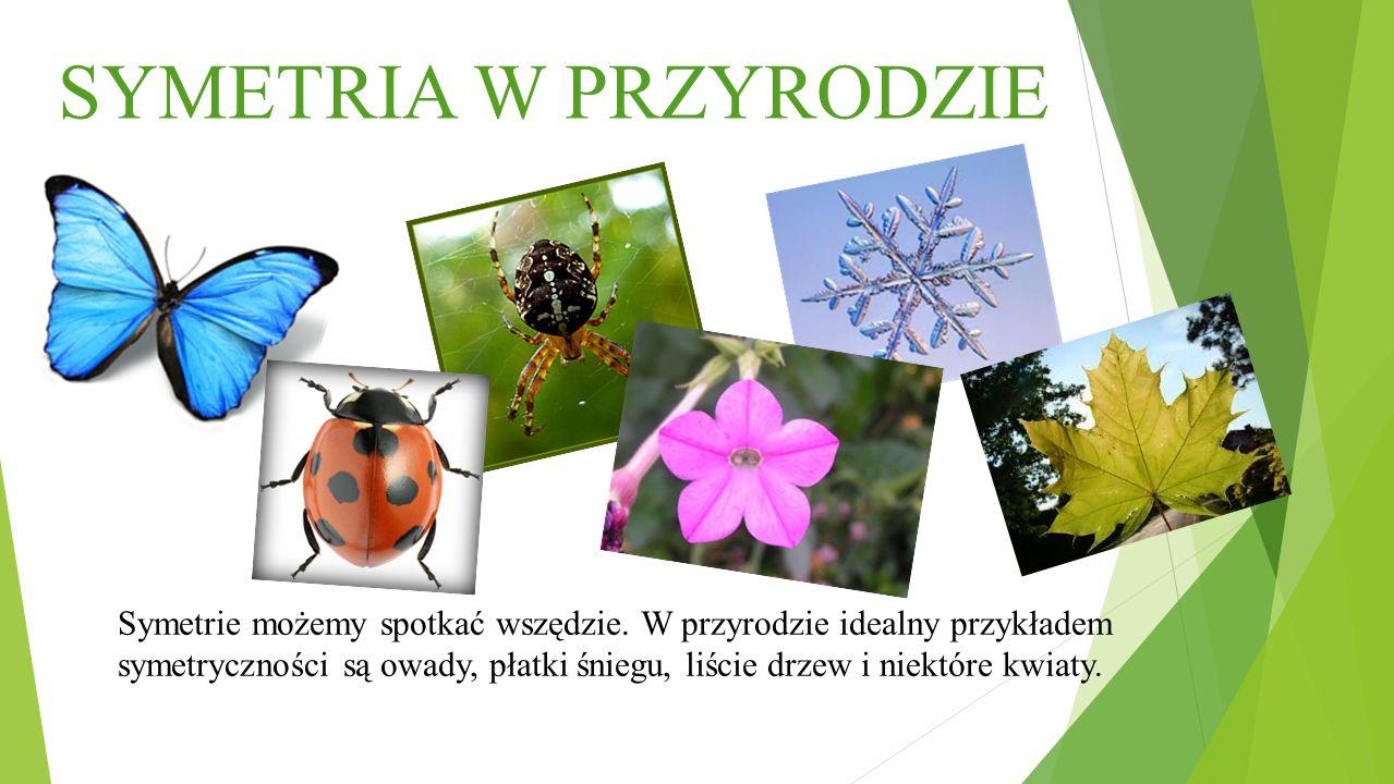 SYMETRIA W PRZYRODZIE Symetrie możemy spotkać wszędzie. W przyrodzie idealny przykładem symetryczności są owady, płatki śniegu, liście drzew i niektór