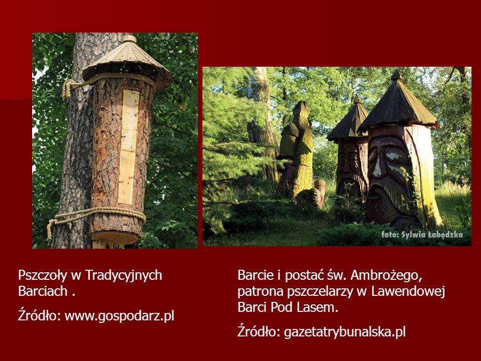 Pszczoły w Tradycyjnych Barciach. Źródło: www.gospodarz.pl Barcie i postać św.