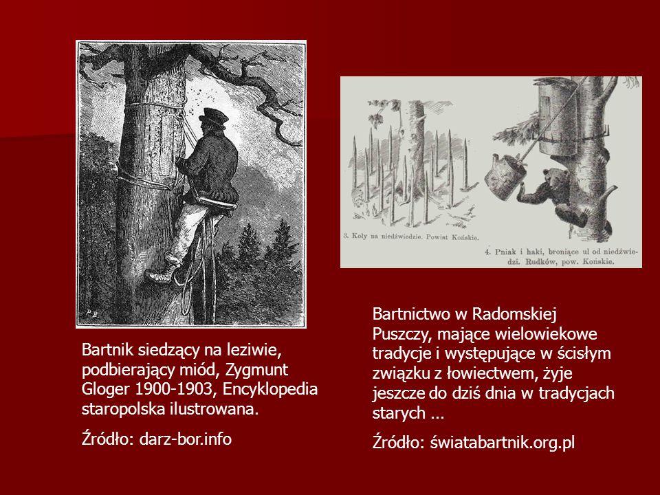 Bartnictwo w Radomskiej Puszczy, mające wielowiekowe tradycje i występujące w ścisłym związku z łowiectwem, żyje jeszcze do dziś dnia w tradycjach starych...