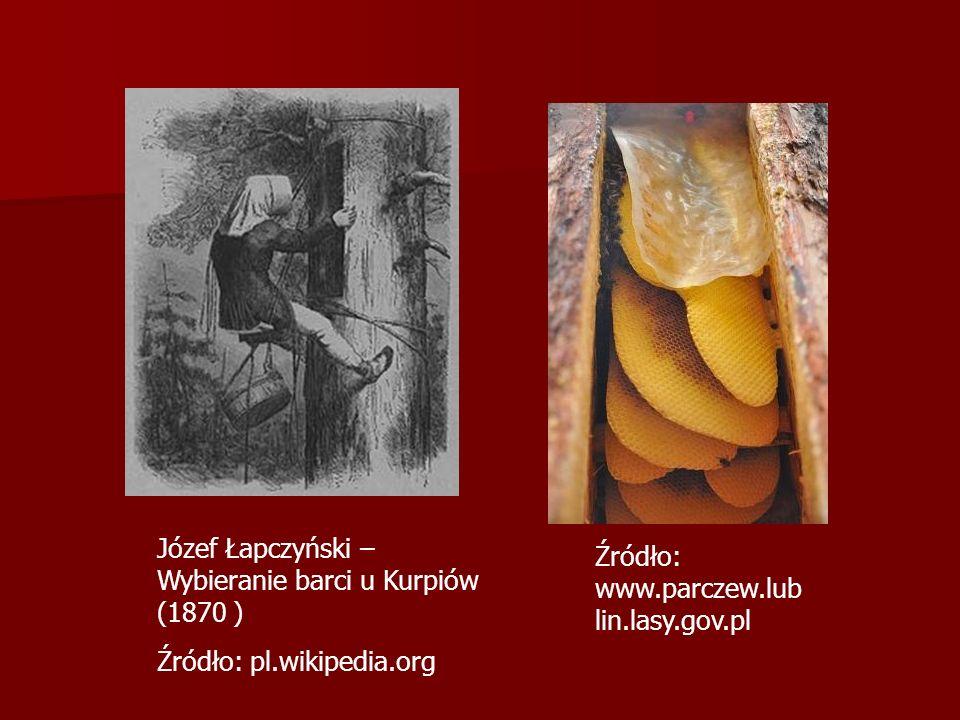 Źródło: www.parczew.lub lin.lasy.gov.pl Józef Łapczyński – Wybieranie barci u Kurpiów (1870 ) Źródło: pl.wikipedia.org