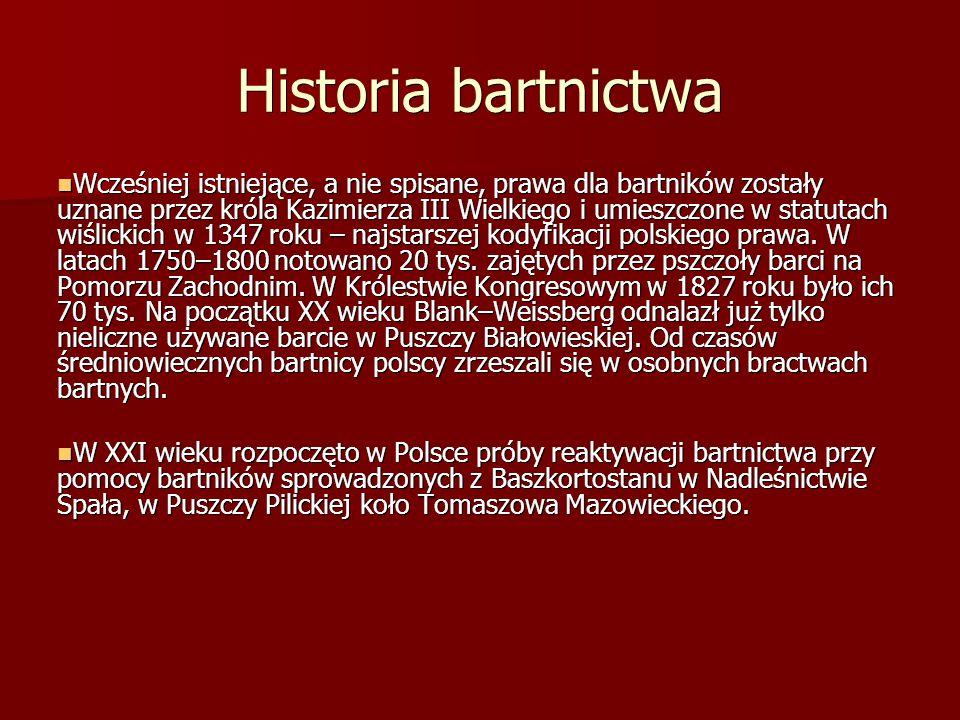 Historia bartnictwa Wcześniej istniejące, a nie spisane, prawa dla bartników zostały uznane przez króla Kazimierza III Wielkiego i umieszczone w statutach wiślickich w 1347 roku – najstarszej kodyfikacji polskiego prawa.