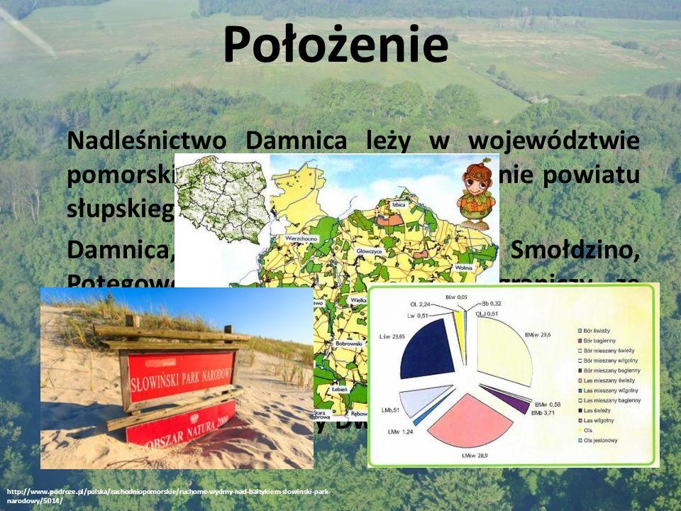 Nadleśnictwo Damnica leży w województwie pomorskim.