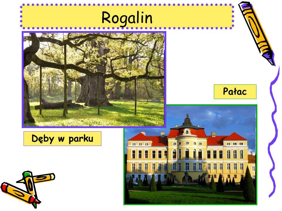 Rogalin Dęby w parku Pałac