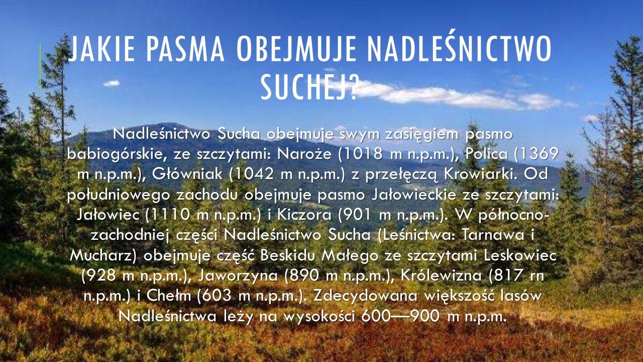 JAKIE PASMA OBEJMUJE NADLEŚNICTWO SUCHEJ? Nadleśnictwo Sucha obejmuje swym zasięgiem pasmo babiogórskie, ze szczytami: Naroże (1018 m n.p.m.), Polica