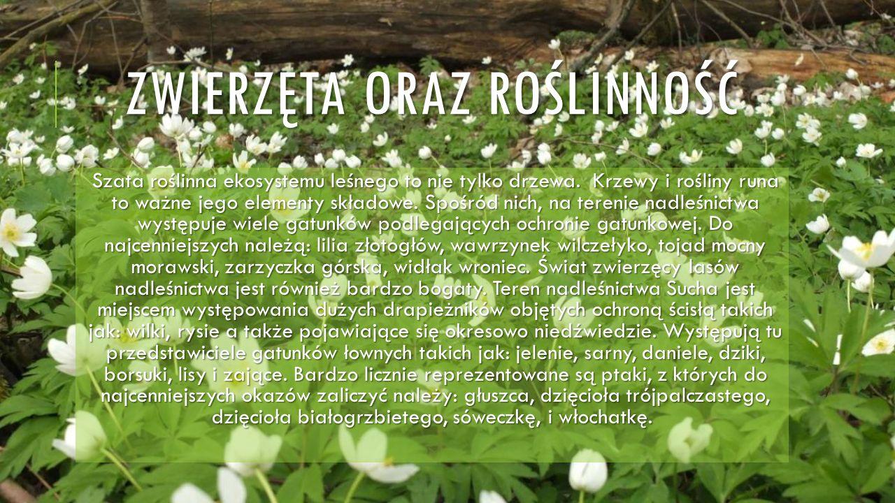 ZWIERZĘTA ORAZ ROŚLINNOŚĆ Szata roślinna ekosystemu leśnego to nie tylko drzewa. Krzewy i rośliny runa to ważne jego elementy składowe. Spośród nich,