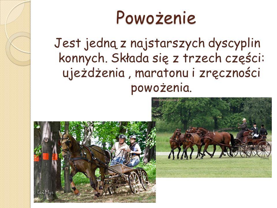 Powożenie Jest jedną z najstarszych dyscyplin konnych.