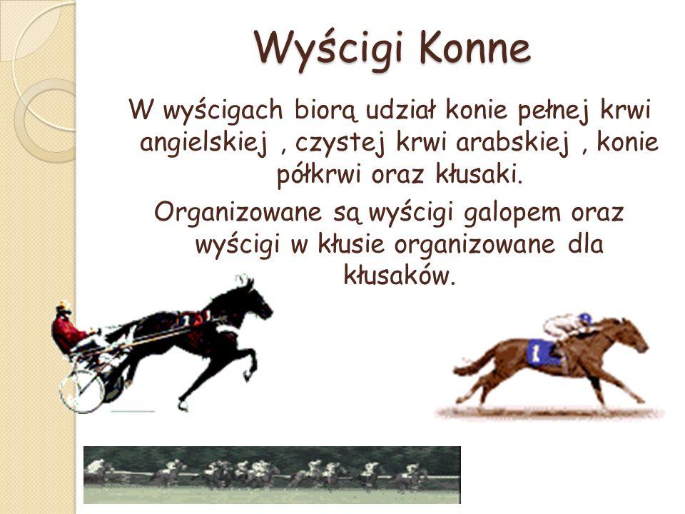 Wyścigi Konne W wyścigach biorą udział konie pełnej krwi angielskiej, czystej krwi arabskiej, konie półkrwi oraz kłusaki.