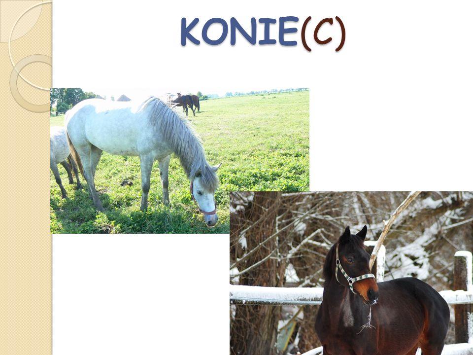 KONIE(C)