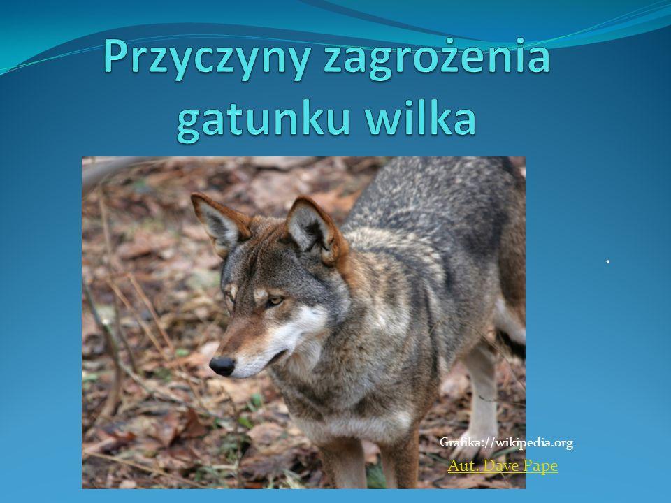 Obecnie największym problemem dla przetrwania żywotnej populacji wilka w Europie jest fragmentacja lasów i ich postępująca izolacja, spowodowana gwałtownym rozwojem cywilizacyjnym.