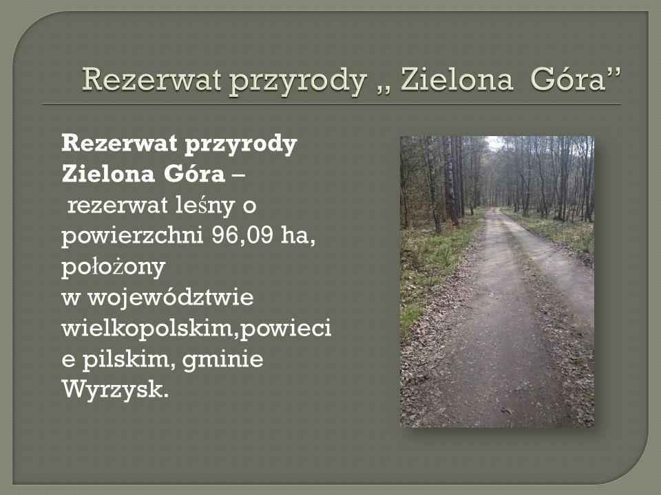 Rezerwat przyrody Zielona Góra – rezerwat le ś ny o powierzchni 96,09 ha, po ł o ż ony w województwie wielkopolskim,powieci e pilskim, gminie Wyrzysk.