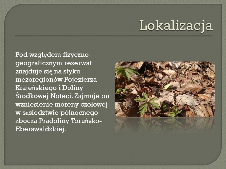Pod wzgl ę dem fizyczno- geograficznym rezerwat znajduje si ę na styku mezoregionów Pojezierza Kraje ń skiego i Doliny Ś rodkowej Noteci.