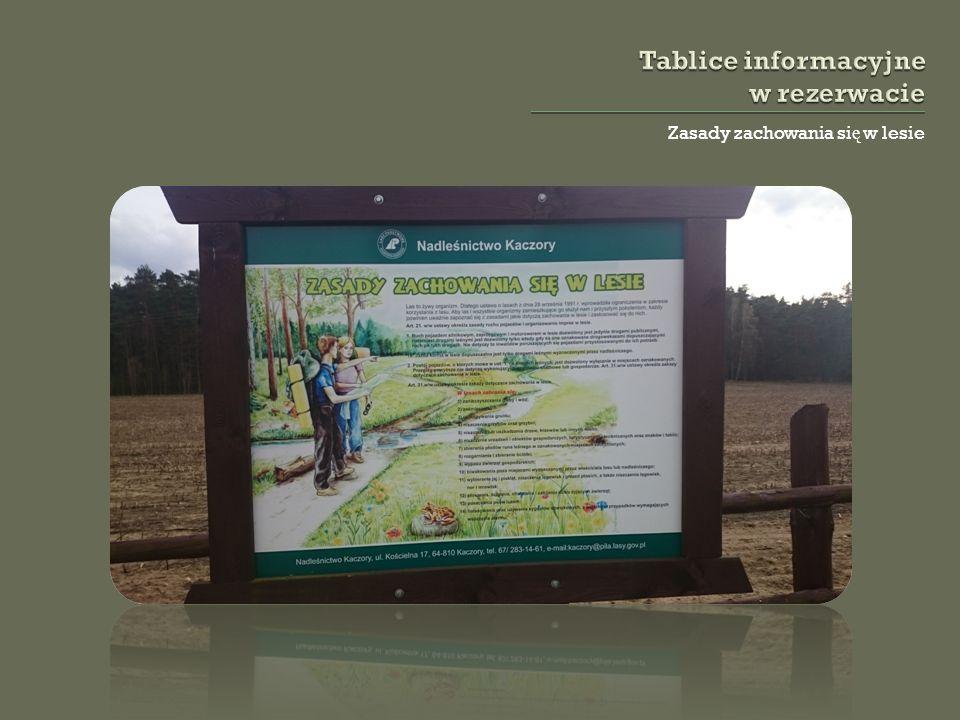 Zasady zachowania si ę w lesie