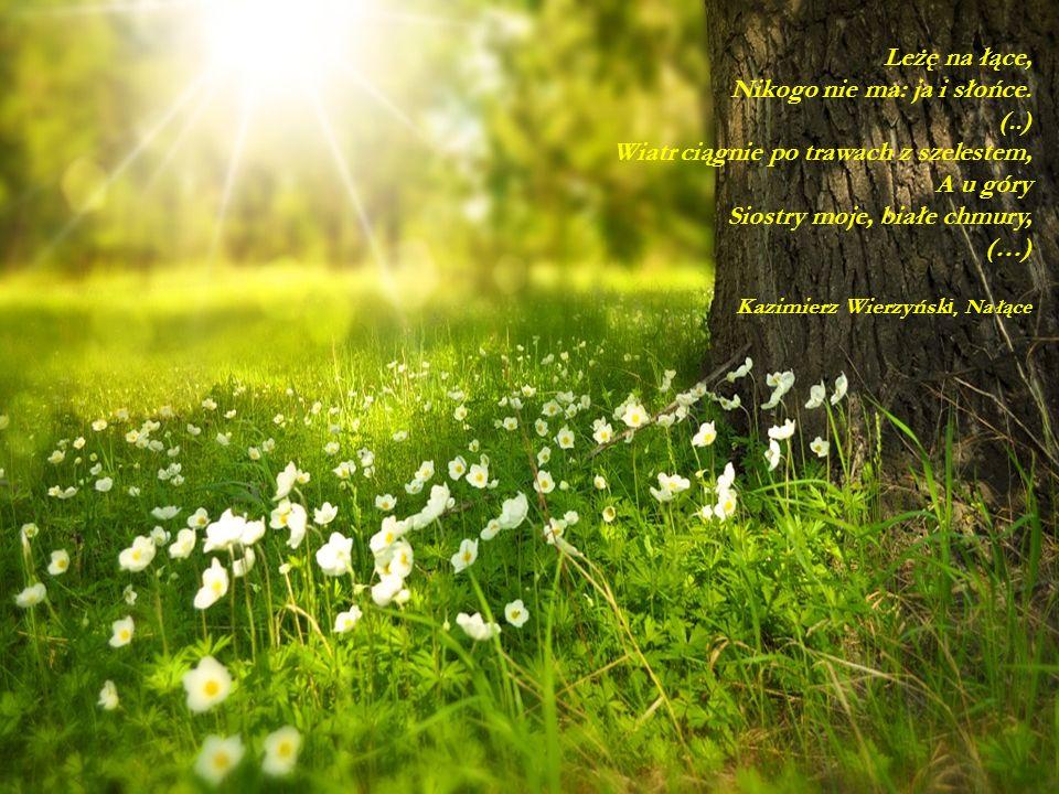 Leżę na łące, Nikogo nie ma: ja i słońce. (..) Wiatr ciągnie po trawach z szelestem, A u góry Siostry moje, białe chmury, (…) Kazimierz Wierzyńsk i, N
