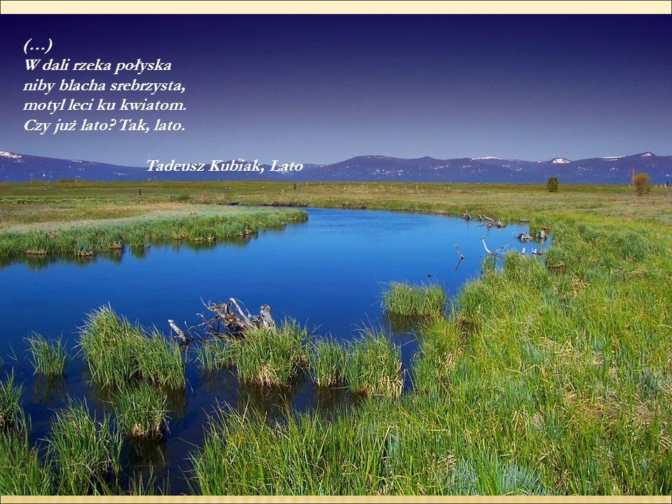 (…) W dali rzeka połyska niby blacha srebrzysta, motyl leci ku kwiatom. Czy już lato? Tak, lato. Tadeusz Kubiak, Lato
