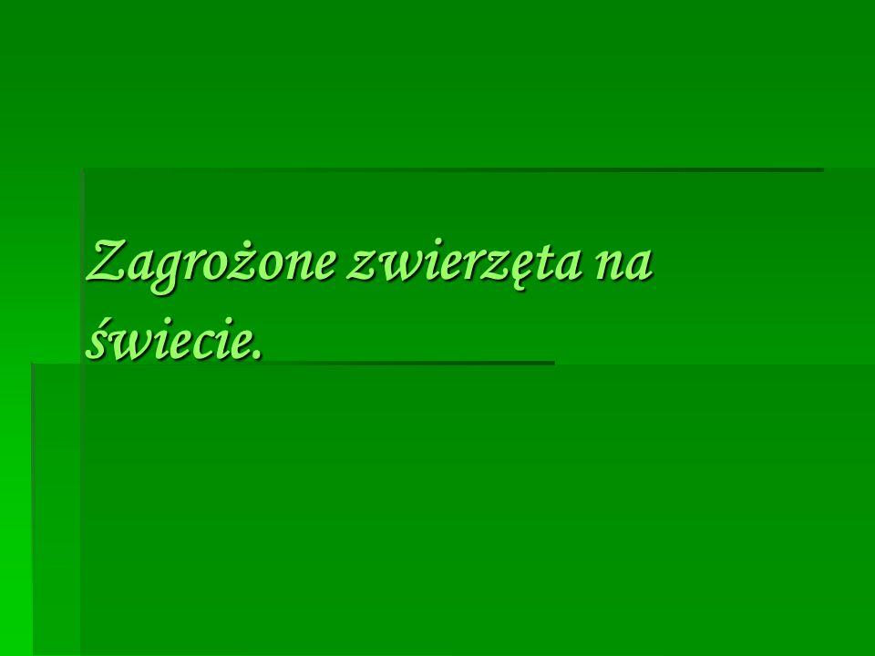  Żubr– gatunek łożyskowca z rodziny krętorogich, rzędu parzystokopytnych.