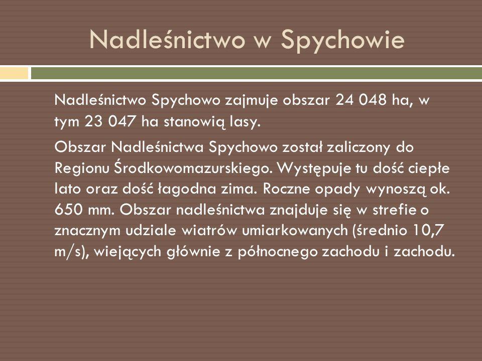 Nadleśnictwo w Spychowie Nadleśnictwo Spychowo zajmuje obszar 24 048 ha, w tym 23 047 ha stanowią lasy.