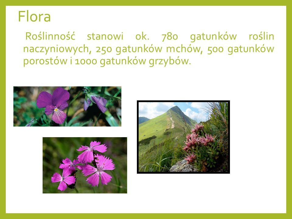 Flora Roślinność stanowi ok. 780 gatunków roślin naczyniowych, 250 gatunków mchów, 500 gatunków porostów i 1000 gatunków grzybów.