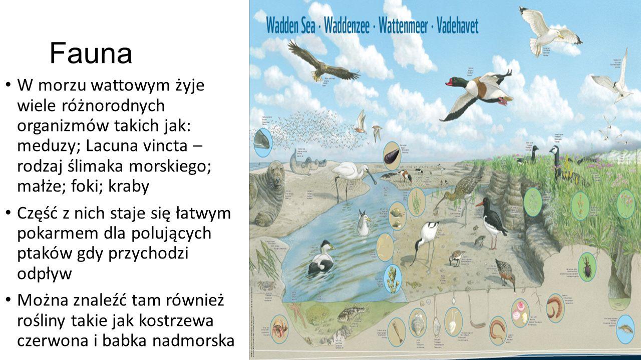 Ptactwo Morze jest atrakcją turystyczną także jako siedlisko ogromnej ilości ptaków wędrownych, które co roku przylatują w to miejsce.