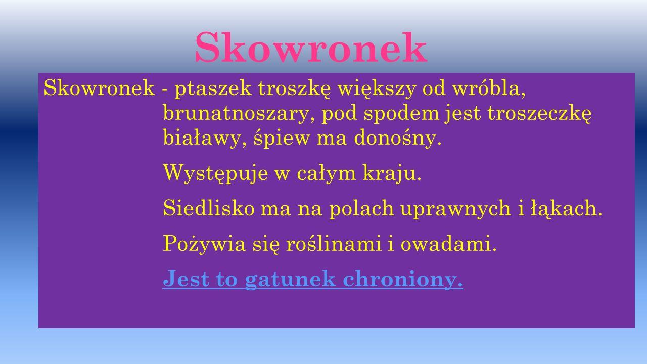Zdjęcia: Paweł Wacławik