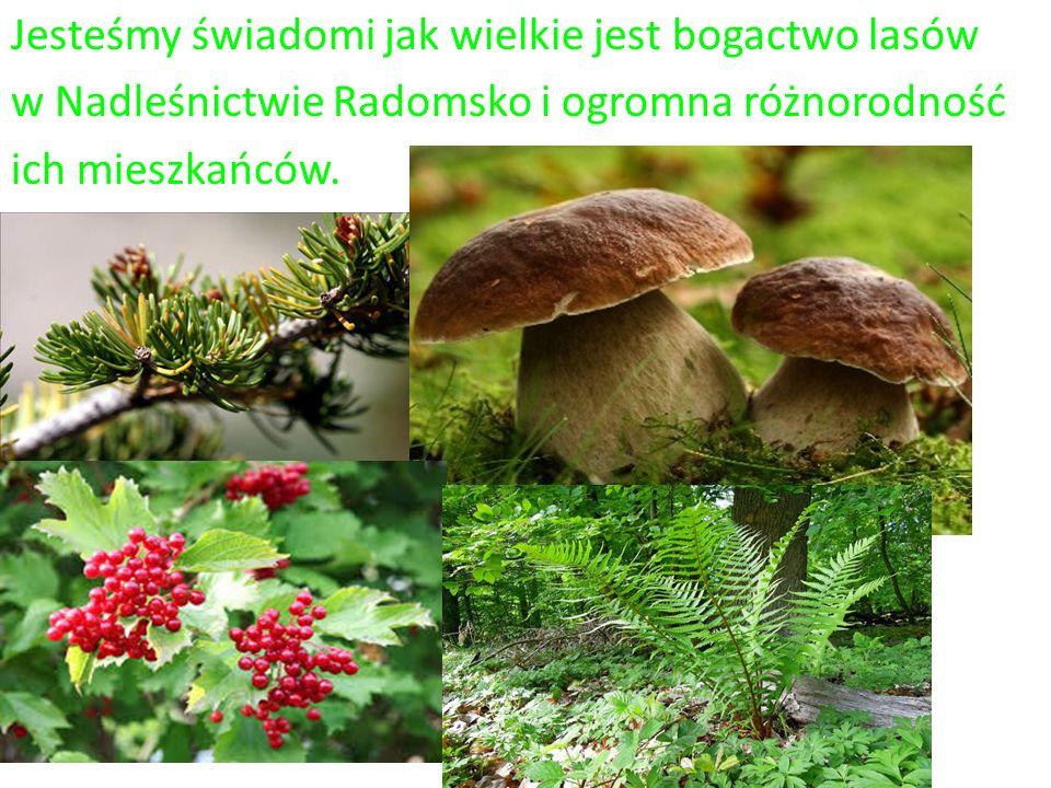 Jesteśmy świadomi jak wielkie jest bogactwo lasów w Nadleśnictwie Radomsko i ogromna różnorodność ich mieszkańców.