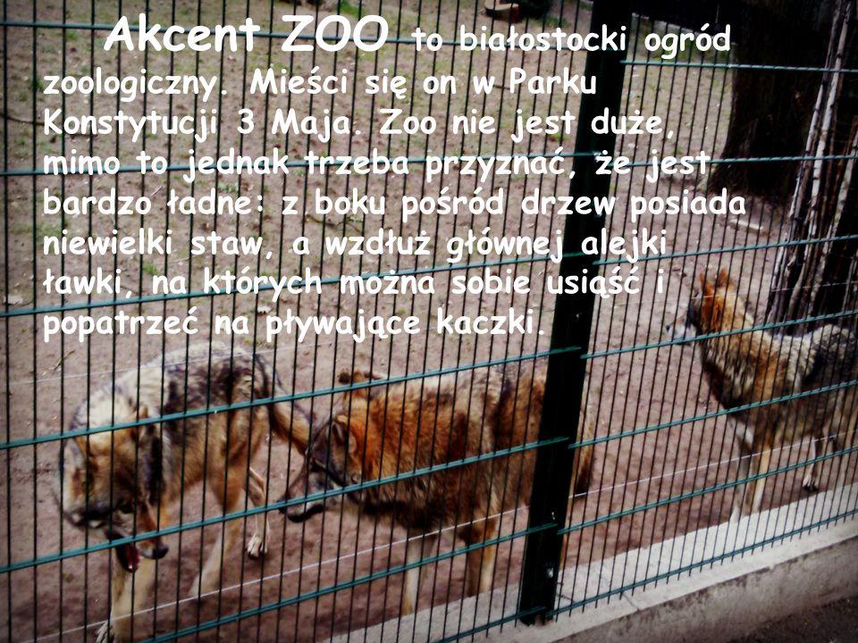 Akcent ZOO to białostocki ogród zoologiczny. Mieści się on w Parku Konstytucji 3 Maja. Zoo nie jest duże, mimo to jednak trzeba przyznać, że jest bard