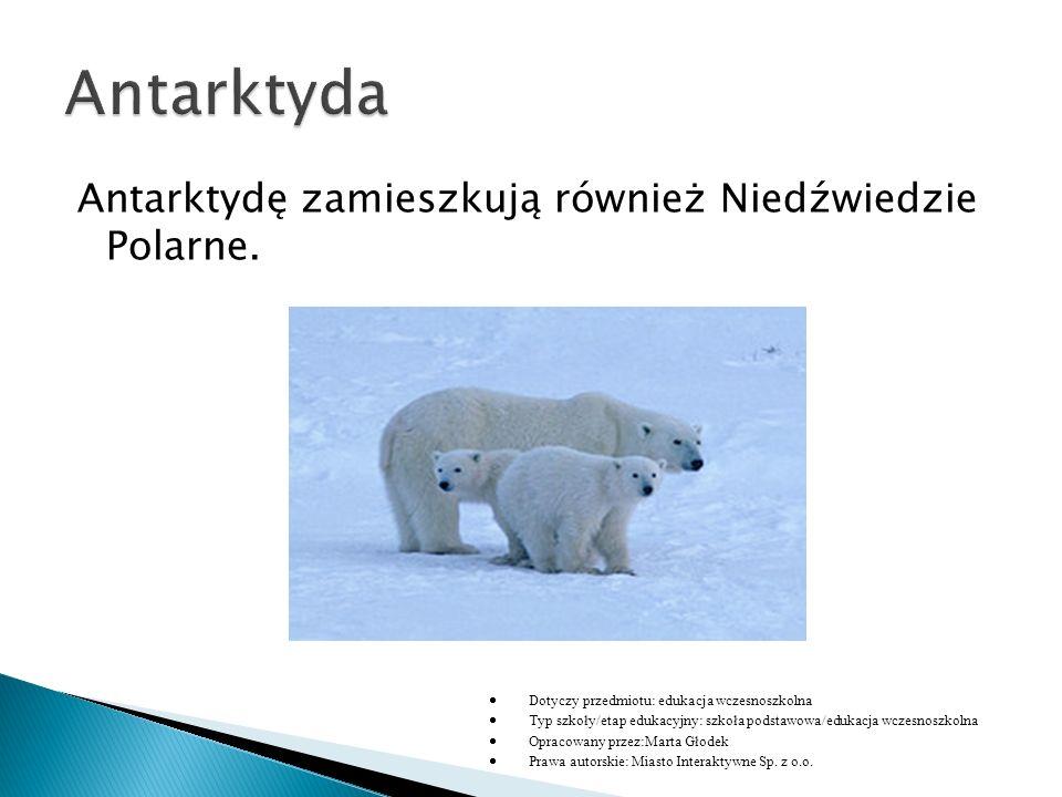 Antarktydę zamieszkują również Niedźwiedzie Polarne.  Dotyczy przedmiotu: edukacja wczesnoszkolna  Typ szkoły/etap edukacyjny: szkoła podstawowa/edu