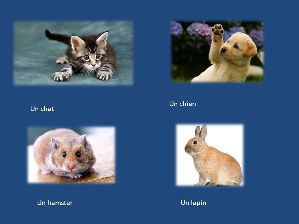 Un chat Un chien Un hamsterUn lapin