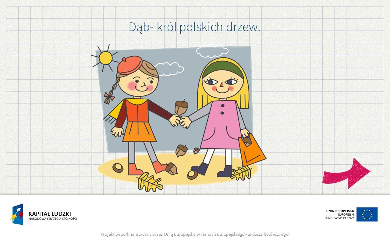 Dąb- król polskich drzew.