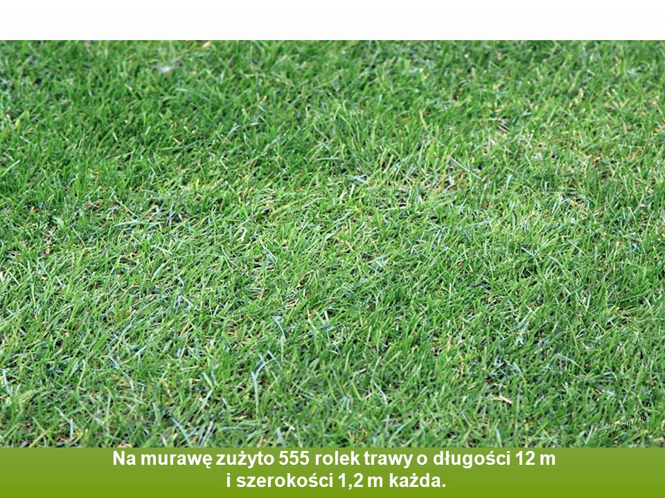Na murawę zużyto 555 rolek trawy o długości 12 m i szerokości 1,2 m każda.