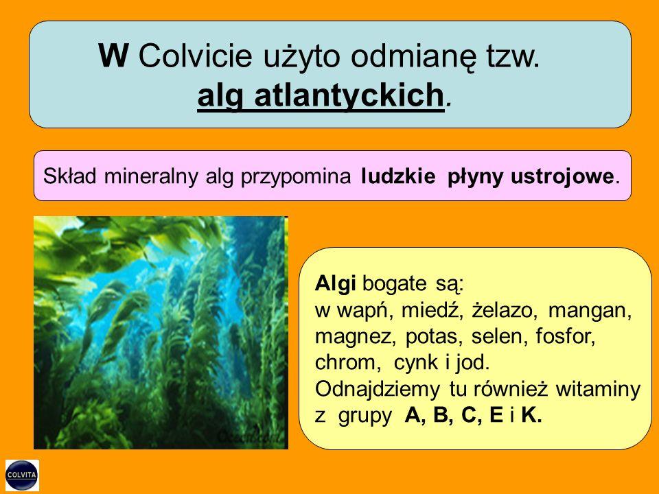 Skład mineralny alg przypomina ludzkie płyny ustrojowe.