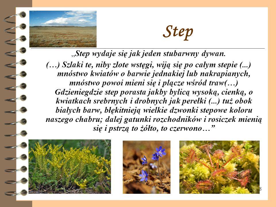 """8 Step """"Step wydaje się jak jeden stubarwny dywan."""