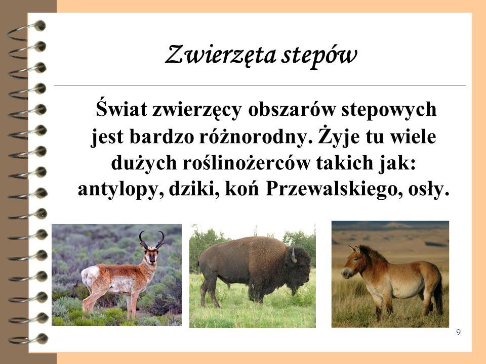 9 Zwierzęta stepów Świat zwierzęcy obszarów stepowych jest bardzo różnorodny.