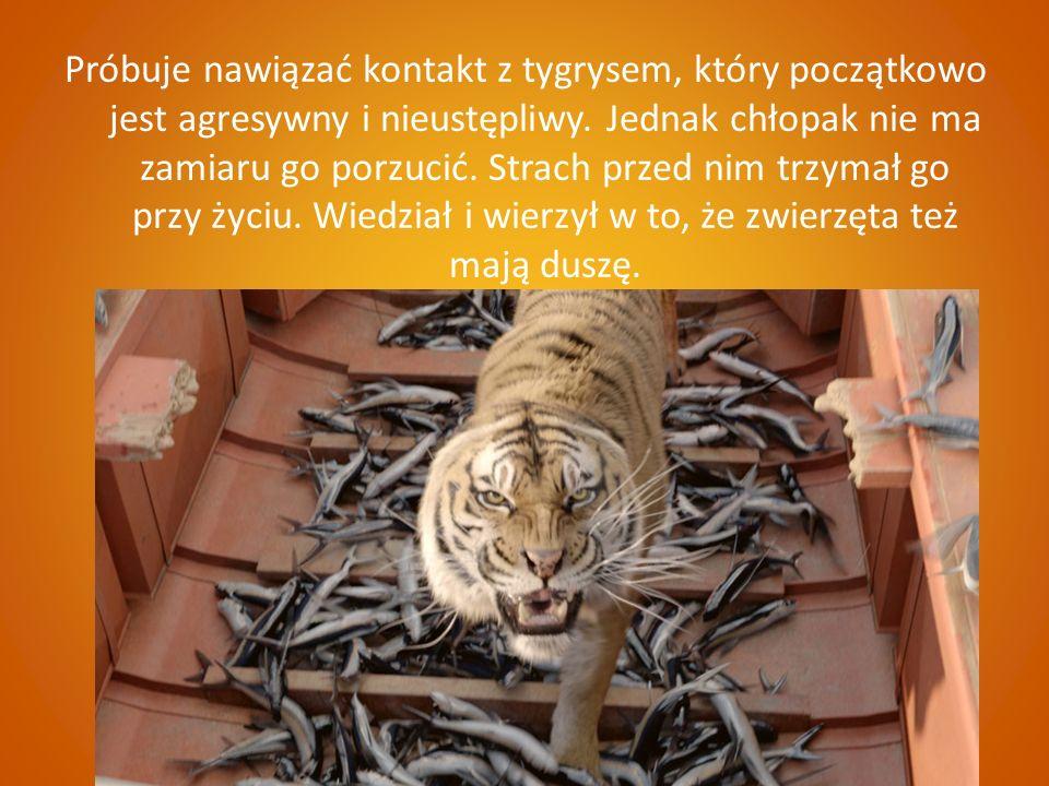 Próbuje nawiązać kontakt z tygrysem, który początkowo jest agresywny i nieustępliwy.