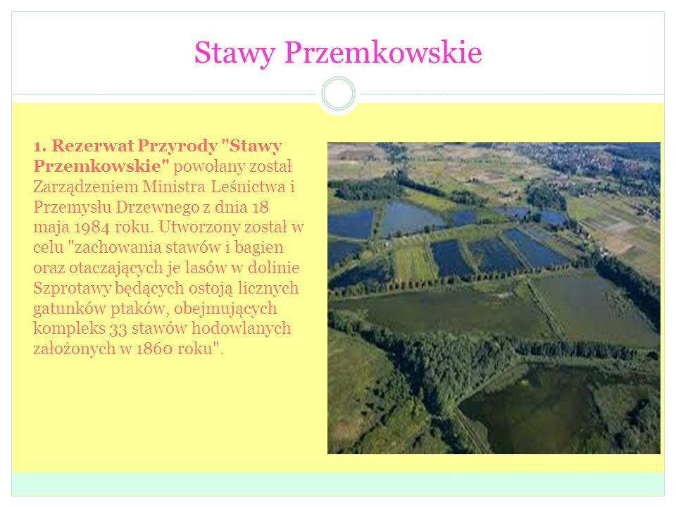 Stawy Przemkowskie 1. Rezerwat Przyrody