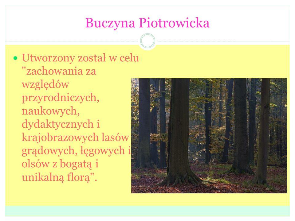 Buczyna Piotrowicka Utworzony został w celu