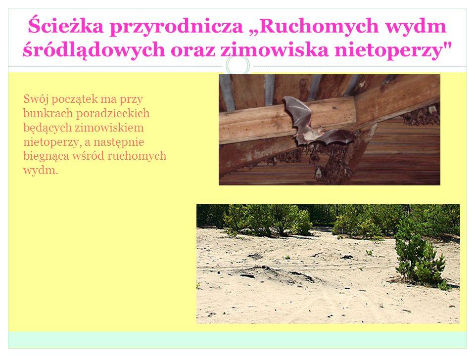 """Ścieżka przyrodnicza """"Ruchomych wydm śródlądowych oraz zimowiska nietoperzy Swój początek ma przy bunkrach poradzieckich będących zimowiskiem nietoperzy, a następnie biegnąca wśród ruchomych wydm."""