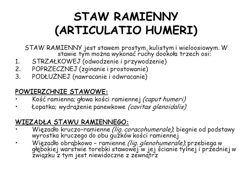 STAW RAMIENNY (ARTICULATIO HUMERI) STAW RAMIENNY jest stawem prostym, kulistym i wieloosiowym.