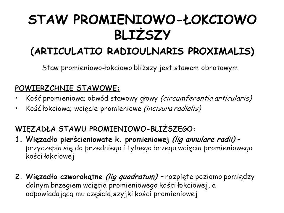 STAW PROMIENIOWO-ŁOKCIOWO BLIŻSZY (ARTICULATIO RADIOULNARIS PROXIMALIS) Staw promieniowo-łokciowo bliższy jest stawem obrotowym POWIERZCHNIE STAWOWE: Kość promieniowa; obwód stawowy głowy (circumferentia articularis) Kość łokciowa; wcięcie promieniowe (incisura radialis) WIĘZADŁA STAWU PROMIENIOWO-BLIŻSZEGO: 1.Więzadło pierścieniowate k.