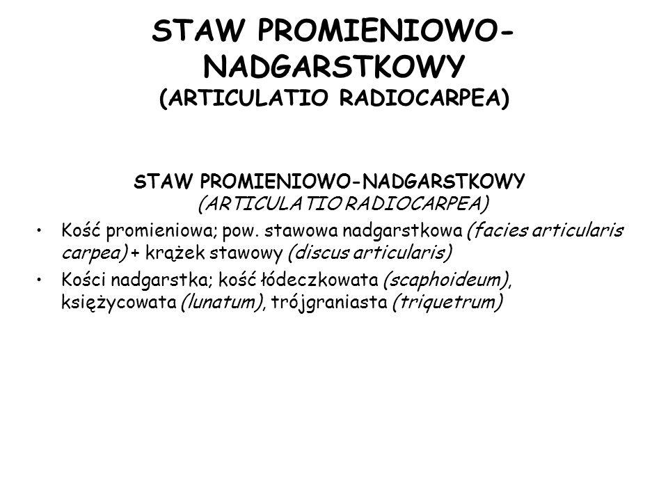 STAW PROMIENIOWO- NADGARSTKOWY (ARTICULATIO RADIOCARPEA) Kość promieniowa; pow.