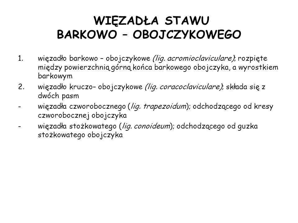 WIĘZADŁA STAWU BARKOWO – OBOJCZYKOWEGO 1.więzadło barkowo – obojczykowe (lig.